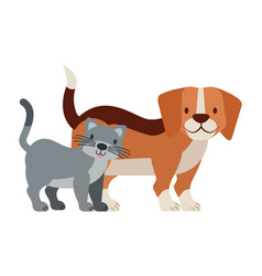 pets dog and cat on white background vector image