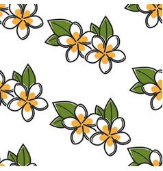 Plumeria plant seamless pattern thailand flower vector