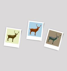 Polaroid photo of deer vector