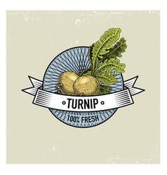 turnip vintage set of labels emblems or logo for vector image vector image