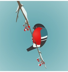Bullfinch Sitting on Ashberry Twig vector image vector image