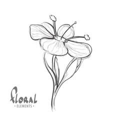 summer fragrant flower vector image vector image