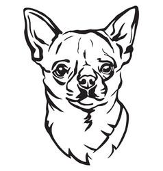 decorative portrait dog chihuahua vector image