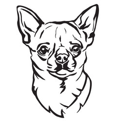 Decorative portrait of dog chihuahua vector