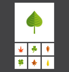 flat icon leaves set of linden leafage hickory vector image