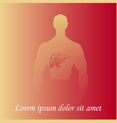 Human liver in man silhouette vector