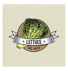 lettuce vintage set of labels emblems or logo for vector image