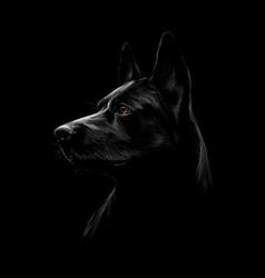 portrait a black shepherd dog on a black vector image