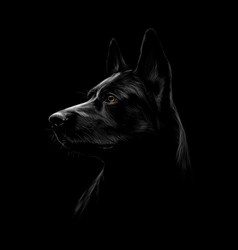 portrait of a black shepherd dog on a black vector image