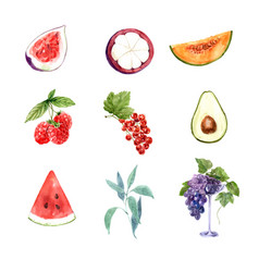 Set various isolated watercolor fruits on vector