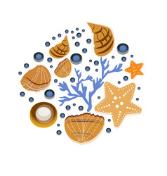 background with seashell hand drawn vector image