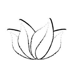 leaves nature decoration sketch vector image