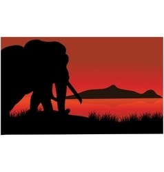 Single elephant silhouette of scenery vector image vector image