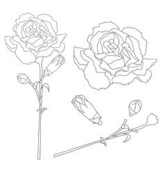 dianthus caryophyllus outline - carnation flower vector image vector image