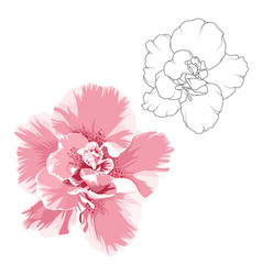 camelia flower design elements set outline vector image