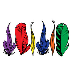 Colorful hand drawn bird feathers isolated on vector