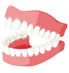 Dental theme with teeth model vector