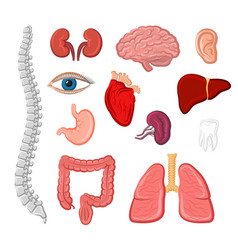 Human organ isolated icon set for anatomy design vector