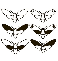Moth butterfly vector