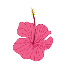 Pink hibiscus tropical flower hand drawn vector
