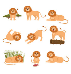 Set of lion in different actions isolated on white vector