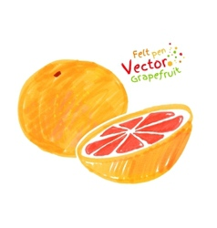 Child drawing of grapefruit vector image vector image