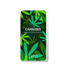 Cannabis or marijuana leaves background drug vector