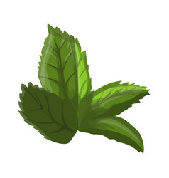 green leaf of a flower vector image