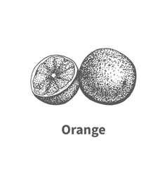 Hand-drawn orange vector