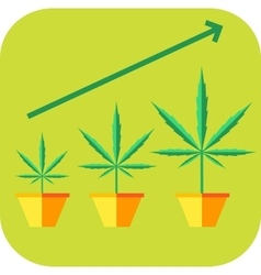 Marijuana vegetative icon vector