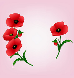 poppies on a light pink background vector image