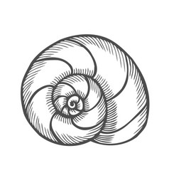 sea shell scallop vector image