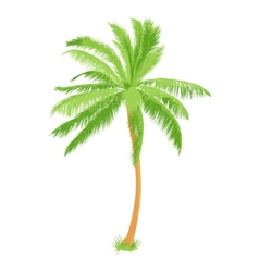 tropical palm vector image