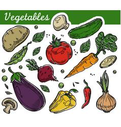 Vegetables organic farm food vegetarian nutrition vector