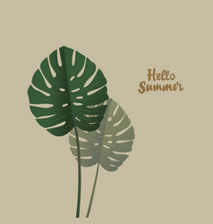 tropical palm monstera leaves hello summer vector image vector image