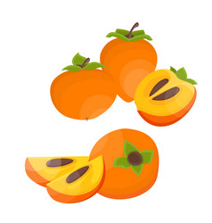 Bright slice and whole persimmon vector