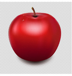 fresh red apple transparent background vector image