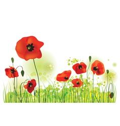 Red Poppies Field summer landscape vector