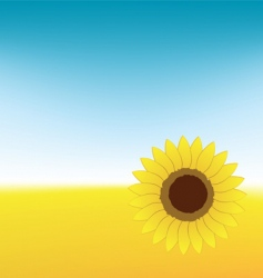 sunflower on summer field vector image