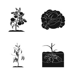 Tomatoes cabbage and other vegetablesplant set vector
