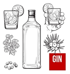 Gin bottle shot glass with ice and lime juniper vector image vector image