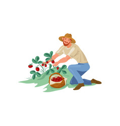 Cute farmer man is collect eco strawberry in vector