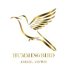 flying hummingbird line art eps 10 vector image