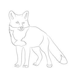 fox sitting lines drawing vector image