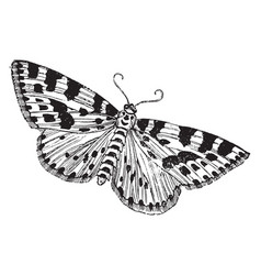 Gooseberry or magpie moth vintage vector