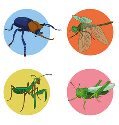 Insects in vector