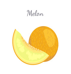 Melon exotic juicy stone fruit isolated vector