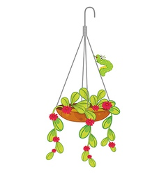 A hanging flowering plant vector image