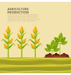 agriculture production design vector image