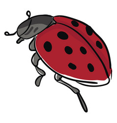 An asian ladybug with a black body looks cute or vector